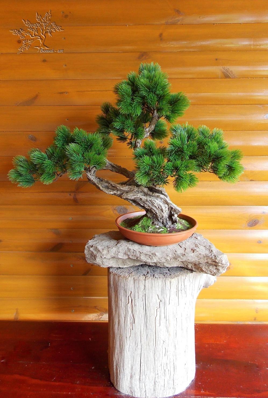 Как и из чего сделать дерево бонсай искусственный